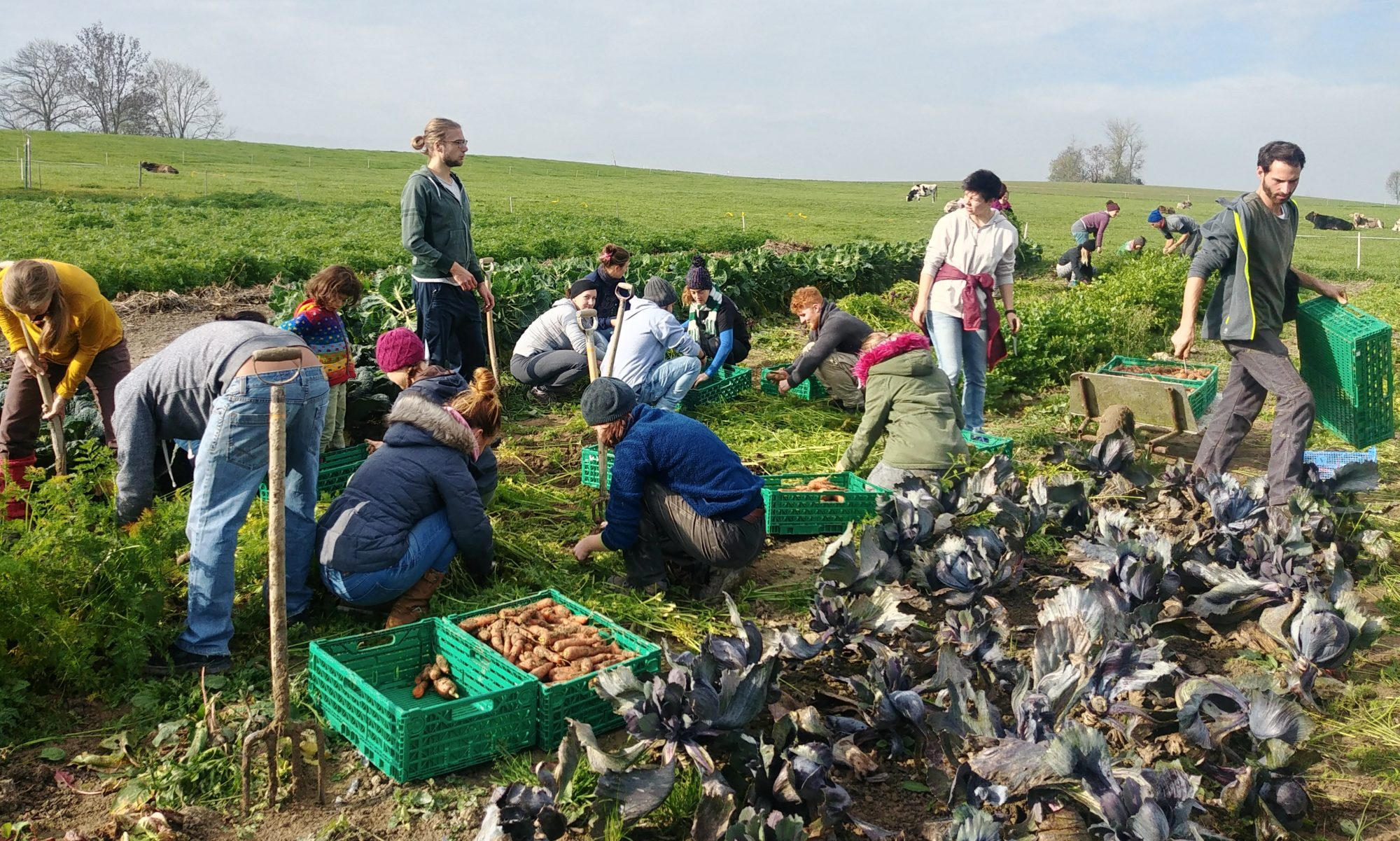 Randebandi Gemüsebau Kooperative